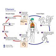 Гистологическая копрология